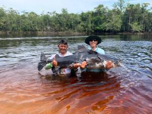 #amazonpeacockbass